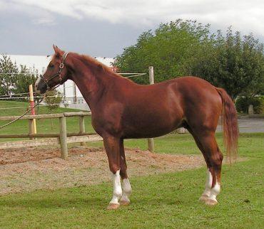 The Horse – Short Essay